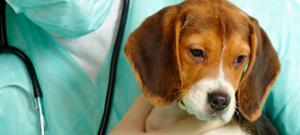 cliniplan_cachorro
