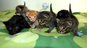 gatitos adopción