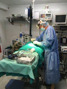 quirofano veterinaria cadiz 2