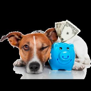 perro-planes-de-salud-veterinario-cadiz