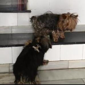 Romeo y Menta